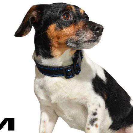 Czarna obroża z niebieskim paskiem dla psa M – XXL  rozmiary