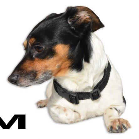 Czarna obroża z srebrnym paskiem dla psa M – XXL  rozmiary