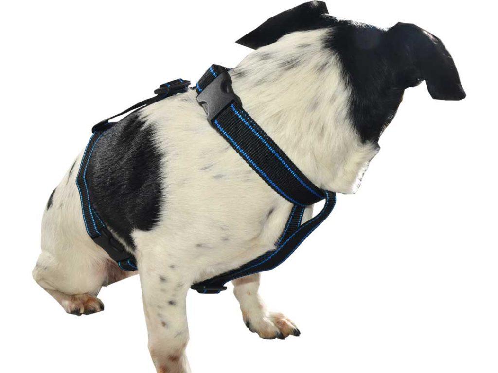 Szelki dla psa M-XXL czarne z niebieskim paskiem