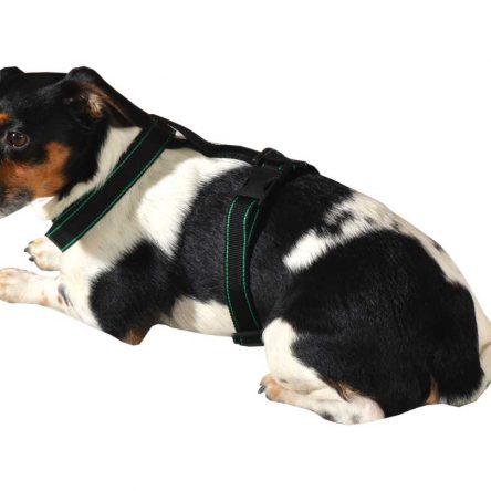 Szelki dla psa M-XXL czarne z zielonym paskiem