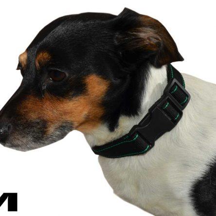 Czarna obroża z zielonym paskiem dla psa M – XXL  rozmiary
