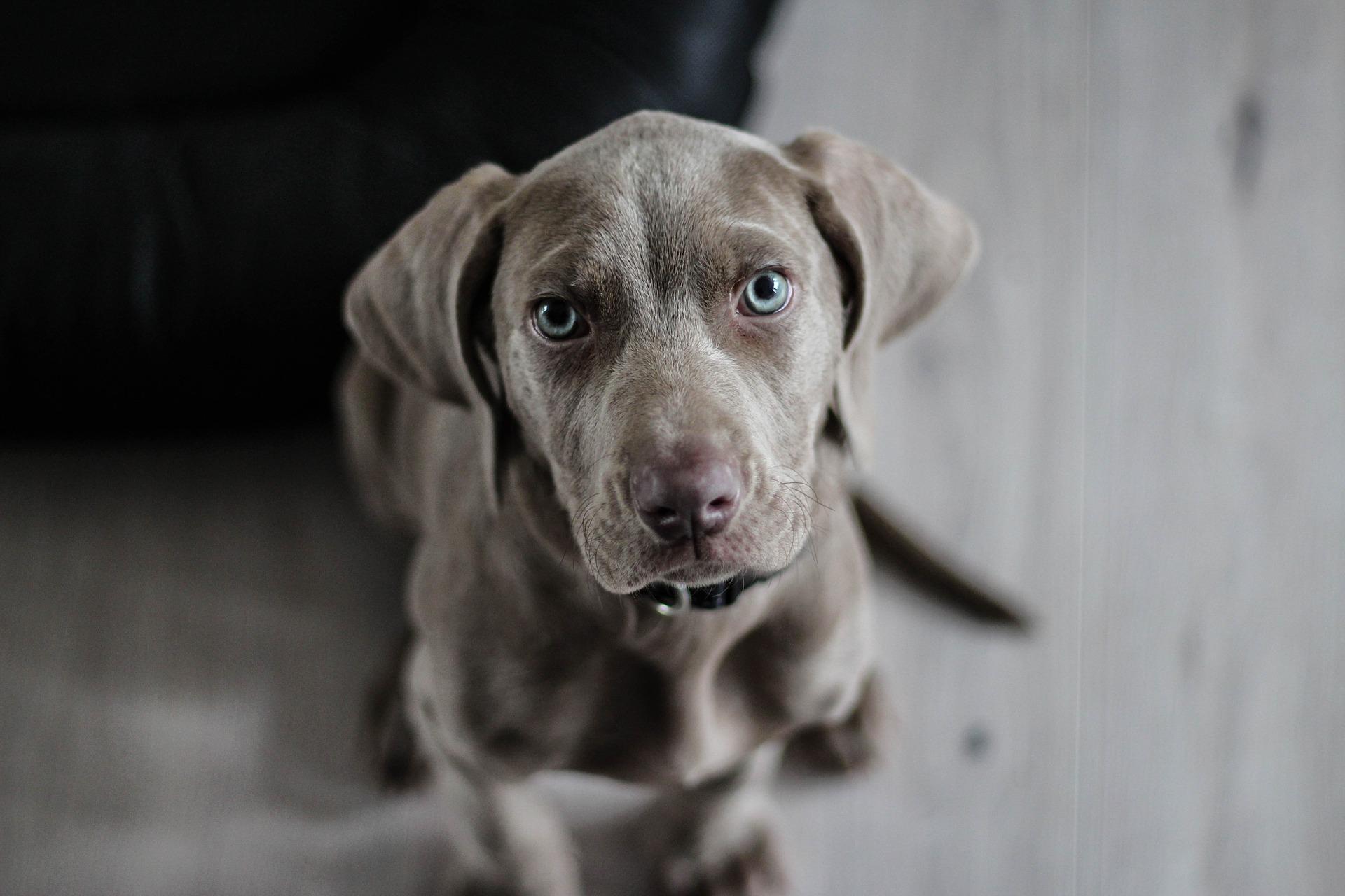 Bytowanie psa w domu
