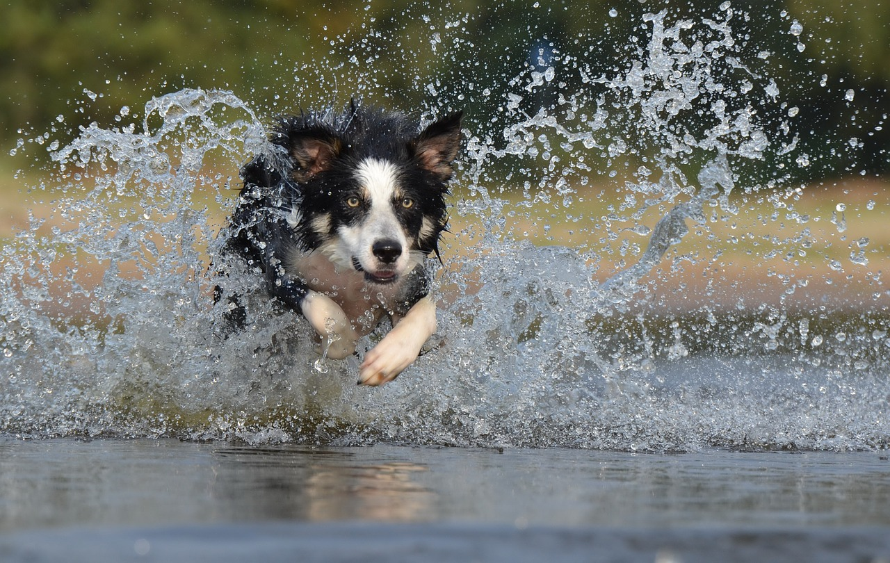 Czy pies powinien pływać