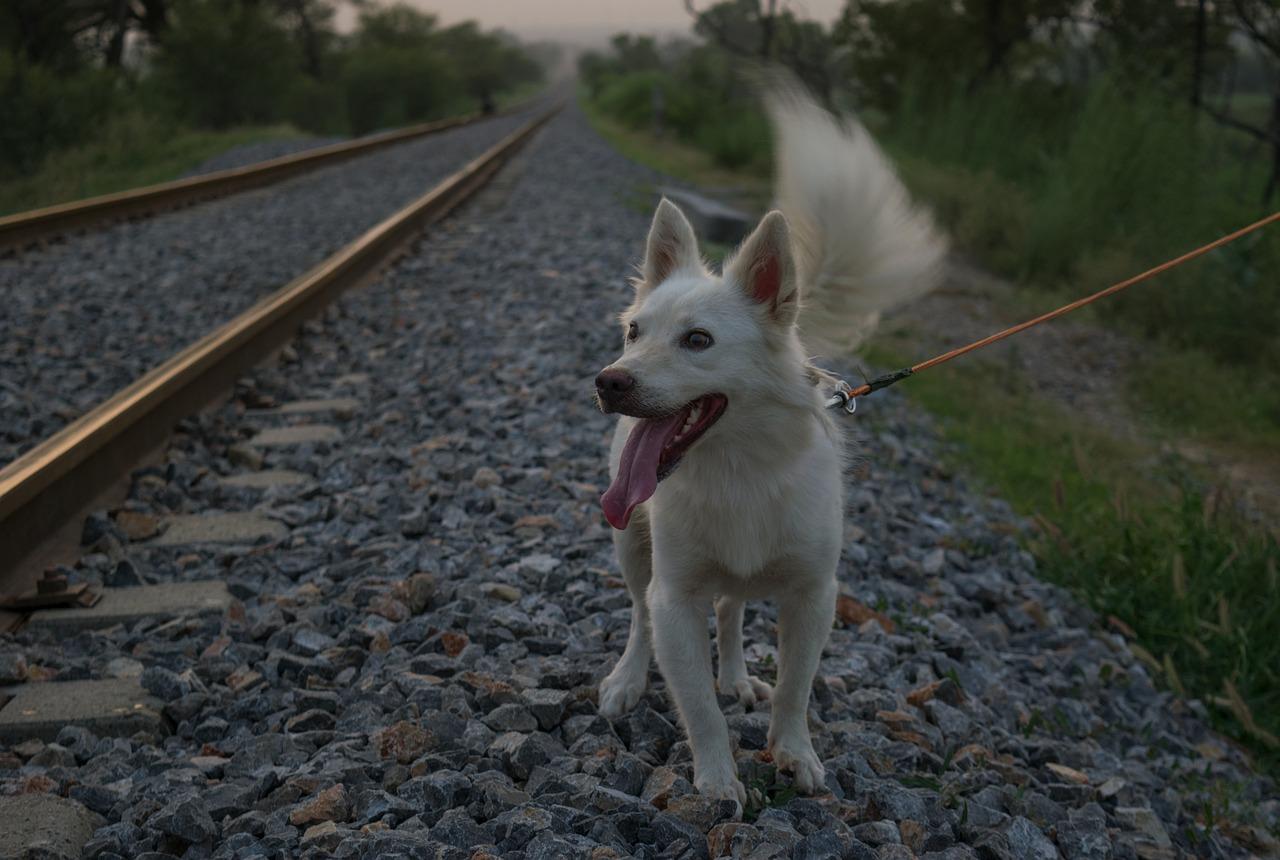 Kary za przewóz zwierząt koleją