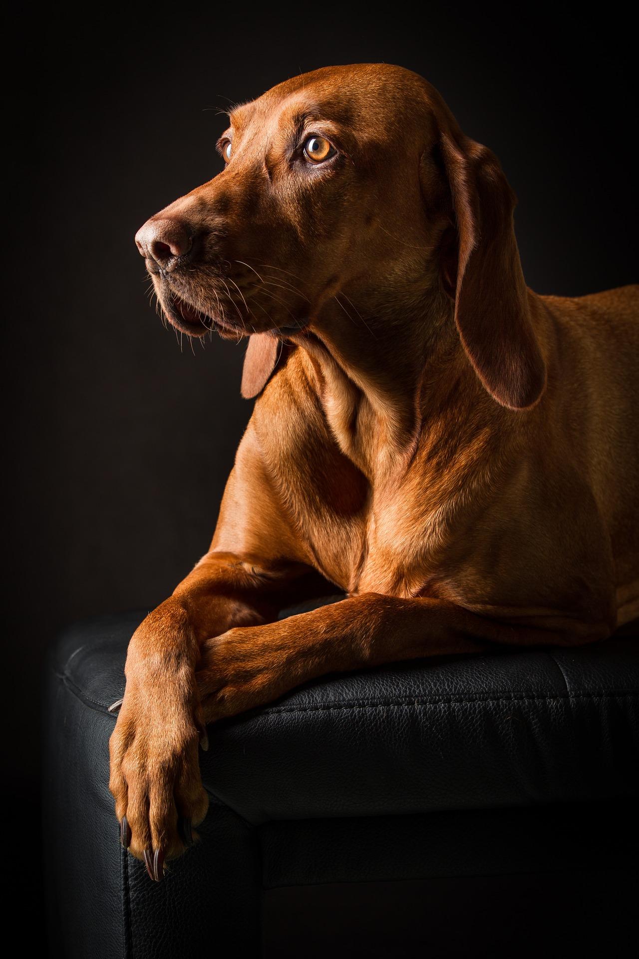 Jak powinno wyglądać prawidłowe wychowanie psa?
