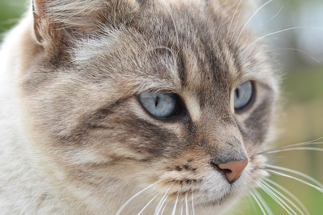 Jakie powinno być idealne legowisko dla kota?