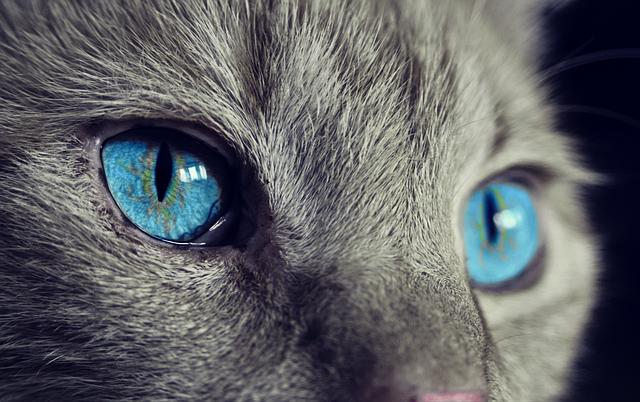 Kot o pięknych oczach