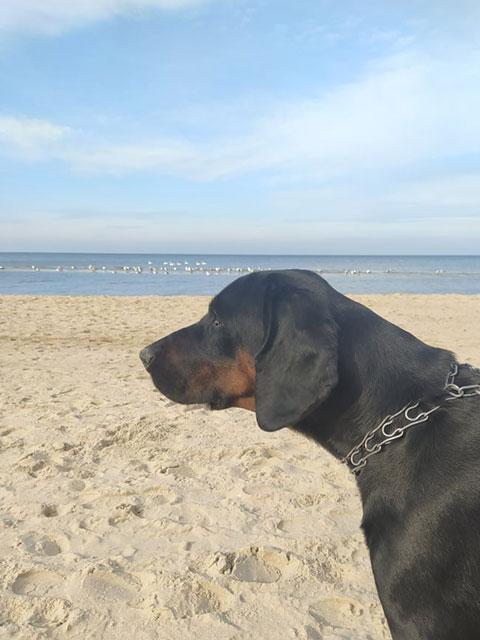 pies nad morzem w zimie