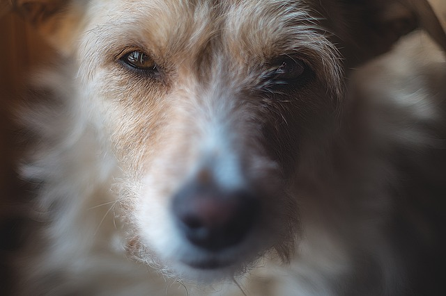 Czy sól szkodzi psom?